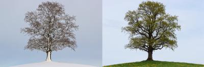 season-winter-spring_small