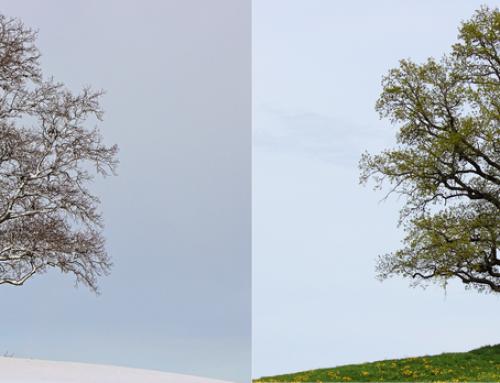 Prechodové obdobie zo zimy do jari